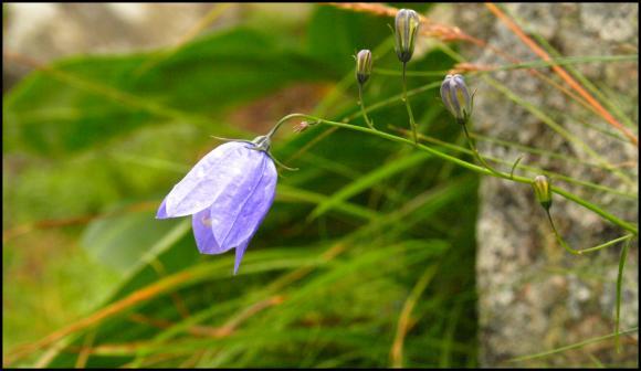 http://boumbadabooum.cowblog.fr/images/flleur.jpg